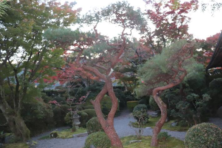 京都嵐山 花のいえ 庭園